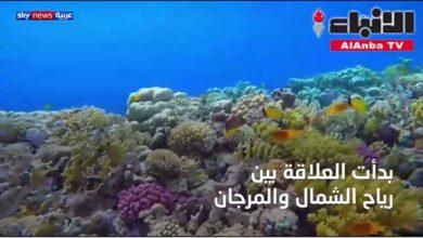 Photo of بالفيديو تأثير التغير المناخي على | جريدة الأنباء