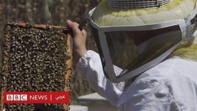 Photo of تراجع إنتاج العسل في غزة يؤثر على دخل مئات العائلات