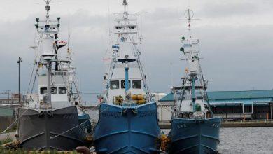 Photo of أسطول ياباني يستعد لاستئناف صيد الحيتان لأغراض تجارية