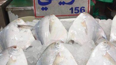 Photo of توقف صيد الزبيدي ابتداء من يوم غد   جريدة الأنباء