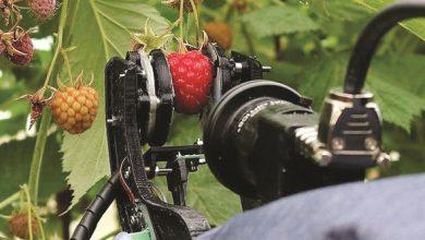 Photo of الروبوتات تدخل مجال جني المحاصيل | جريدة الأنباء