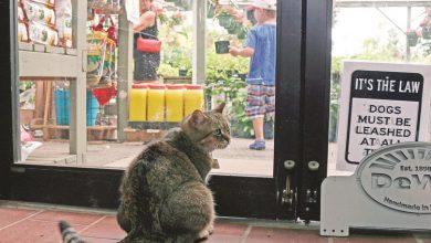 Photo of واشنطن تجند قطط الياقات الزرقاء   جريدة الأنباء