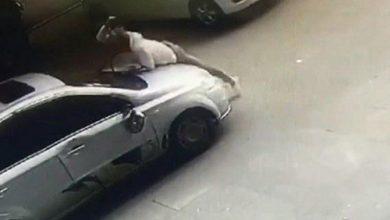 Photo of بالفيديو ردة فعل رجل عندما رأى   جريدة الأنباء