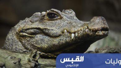 Photo of لأول مرة في مصر.. «الزراعة» تسمح بإقامة مزارع للتماسيح
