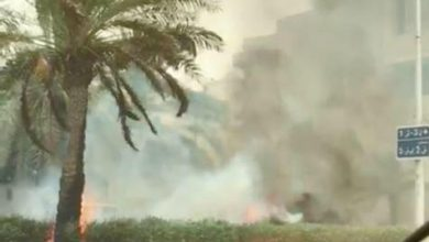 Photo of إخماد حريق أشجار في قرطبة امتد إلى مترًا