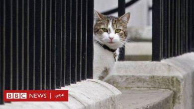 Photo of المهمة الأولى لبوريس جونسون: الحصول على رضا القط لاري