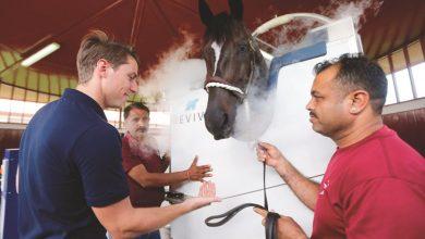 Photo of دبي تعالج الخيول بالتبريد