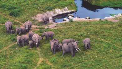 Photo of سايتس: حظر بيع الفيلة