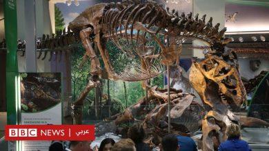 "Photo of إقبال على اقتناء ""الديناصورات"""