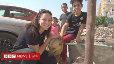 """Photo of """"كدت أموت من سم الكلاب في مصر"""""""