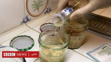 Photo of استخدام خميرة فرعونية عمرها 5000 عام لإنتاج خبز أفضل من المعروف حاليا