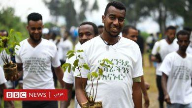 Photo of هل زرعت إثيوبيا 350 مليون شجرة في يوم واحد حقا؟