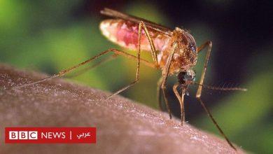 Photo of لماذا يبغي العلماء تعلم لغة الحب بين البعوض؟