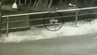 Photo of فيديو لحظات الرعب رضيعة تسقط من | جريدة الأنباء