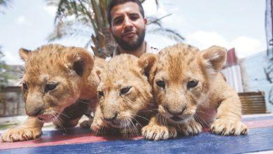 Photo of فتح حديقة للحيوانات في غزة