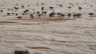 Photo of سفينة الصحراء تسير على الماء فيديو | جريدة الأنباء