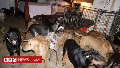 Photo of إعصار دوريان: سيدة تحول منزلها إلى مركز لإيواء 100 كلب ضال