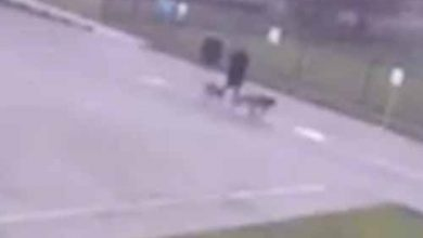 Photo of بالفيديو شاهد لحظة تعرض رجل لصاعقة | جريدة الأنباء