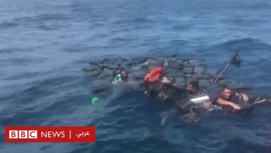 Photo of الكوكايين ينقذ مهربين من أسماك القرش