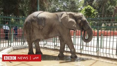 "Photo of نفوق ""نعيمة"" آخر أفيال حديقة حيوانات الجيزة بمصر"