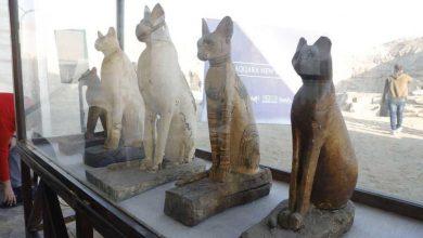 Photo of مصر تكشف عن متحف كامل يضم مومياوات أسود وتماسيح وطيور