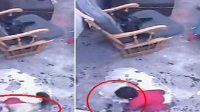 Photo of بالفيديو قطة تنتفض في الوقت المناسب   جريدة الأنباء