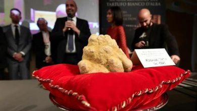 Photo of بيع كمأة بيضاء بـ120 ألف يورو