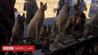 Photo of مصر تعرض للجمهور مومياوات لحيوانات عُثر عليه العام الماضي