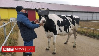 "Photo of الواقع الافتراضي: منح أبقار في روسيا أجهزة لهذه التقنية بهدف ""تخفيف القلق"""