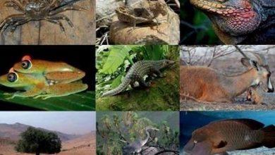 Photo of أهم الكائنات الحية التي تم اكتشافها | جريدة الأنباء