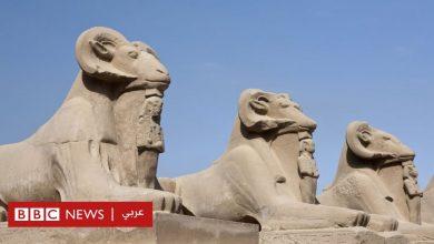 Photo of لماذا يعارض أثريون نقل تماثيل كباش أثرية من الأقصر إلى القاهرة؟