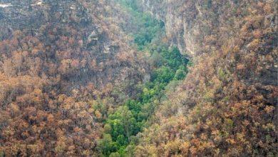 Photo of عواصف رعدية تجتاح ساحل أستراليا الشرقي الذي دمرته حرائق الغابات