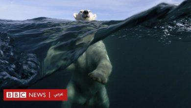 Photo of ما الذي نستطيع فعله للمساعدة في إبطاء ظاهرة التغيّر المناخي