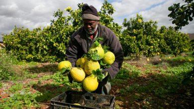 Photo of الاحتلال يمنع تصدير المنتجات الزراعية الفلسطينية إلى العالم