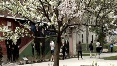 Photo of بالفيديو مزارع يعرض شجرة تنتج 40   جريدة الأنباء