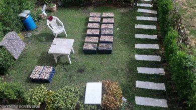 Photo of ضبط وليمة من الثعابين لأسرة صينية بالقاهرة