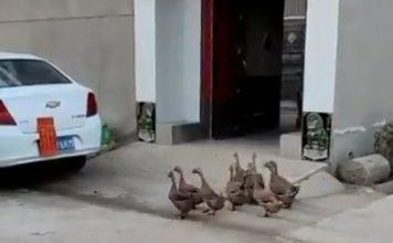 Photo of فيديو الصداقة الحقيقية شاهد بط   جريدة الأنباء