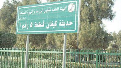 Photo of إغلاق الحدائق في البلاد حتى إشعار آخر