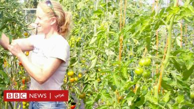 Photo of نقص الأيدي العاملة في مجال الزراعة يهدد إمدادات الغذاء حول العالم