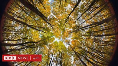 Photo of تغير المناخ: هل تنقذ زراعة ملايين الأشجار الكوكب حقاً؟