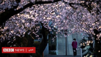 Photo of فيروس كورونا: إلغاء احتفالات موسم تأمل أزهار الكرز في اليابان