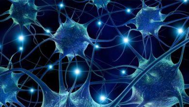 Photo of أمريكا توافق على تجربة الخلايا الجذعية لعلاج الحالات الشديدة ل..