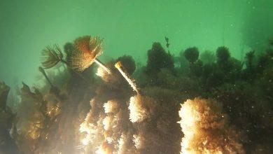 Photo of بالفيديو.. الوباء يكشف النظام البيئي المتنوع في بحيرة البندقية