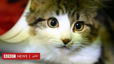 Photo of فيروس كورونا: شينزين أول مدينة صينية تحظر أكل القطط والكلاب