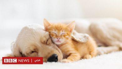 Photo of فيروس كورونا: هل يُمكن أن يُصيب قطك أو كلبك بالمرض؟