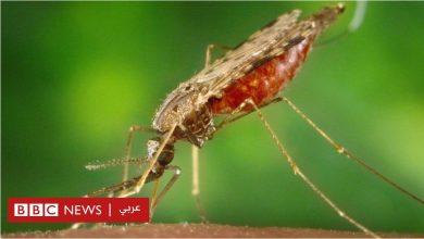 Photo of الملاريا: هل تساعدنا جرثومة في مكافحة انتشار المرض؟