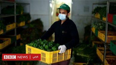 Photo of فيرس كورونا: كيف يؤثر الوباء على الغذاء في البلدان العربية؟
