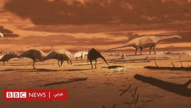Photo of العثور على حفرية لآخر ديناصور مفترس على كوكب الأرض