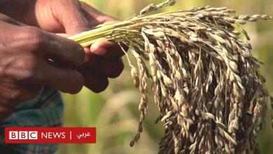 Photo of التغير المناخي: كيف تستخدم الزراعة التقليدية في مواجهة تقلبات المناخ؟