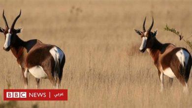 "Photo of مئات الحيوانات البرية على ""حافة الإنقراض"""